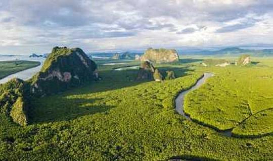 Wir haben festgestellt, dass 2 ° C Erwärmung die meisten tropischen Regenwälder über ihre sichere Wärmeschwelle bringen