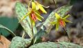 Spring Inafika Mapema Amerika, na Hiyo sio Habari Njema Daima