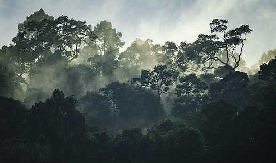 Чому тропічні ліси втрачають свою силу, щоб допомогти людству