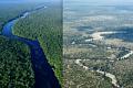 Величезні екосистеми можуть згортатися менше ніж за 50 років