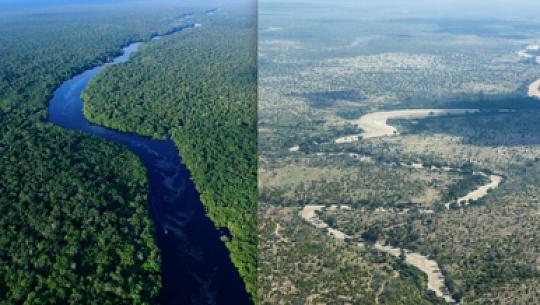 巨大な生態系は50年未満で崩壊する可能性がある