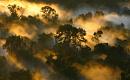 炭素スポンジから炭素源への移行における熱帯林