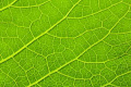 Újjáépítsük a fosszilis tüzelőanyagokat kémiai úton a fenntartható energia megteremtése érdekében