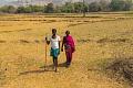 尋找解決方案:印度農民如何改種更具氣候適應能力的農作物