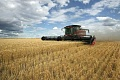Changing Climate Has Stalled Australian Wheat Yields