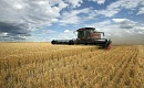 気候の変化がオーストラリアの小麦の収量を失速させている