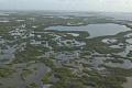 Захист мангрових грибів може запобігати мільйонам доларів внаслідок глобальної шкоди від повені щороку