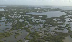 マングローブを保護することで、毎年世界規模の洪水被害で数十億ドルを防ぐことができます