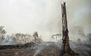 気候変動と森林伐採はアマゾンのダイバックを引き起こしますか?