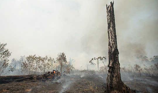 Чи можуть зміни клімату та вирубки лісу викликають відмирання Амазонки?