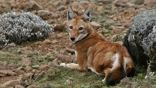 Les mammifères africains pourraient ne pas être en mesure de suivre le rythme du changement climatique