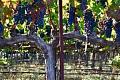 Klimatvärme betyder nytt vin från bekanta platser