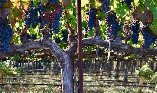 Klimaatverwarming beteken nuwe wyn van bekende plekke