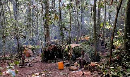 Тропічні ліси можуть нагрівати землю до 2035 року