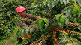 What Climate Change Means for Your Coffee What Climate Change Means for Your Coffee