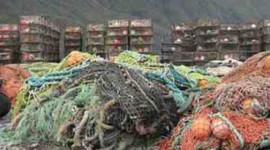 اقتصاد سینک ظرفشویی دریایی به عنوان اقیانوس اسیدیته افزایش