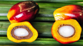 棕榈油不一定是我们认为的邪恶