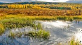 濕地是一個最明智的投資,我們可以使