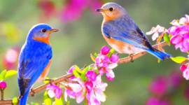 Kenapa Anda Harus Tidak Harapkan untuk Spring Awal