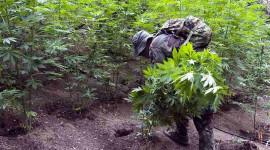 Is Kalifornië hoog en droog deur Cannabis-produsente