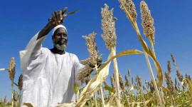 Лібералізовані продовольчі ринки можуть полегшити вплив падіння врожаю в таких південних регіонах, як Африка. Зображення: Fred Noy / UN Photo через Flickr