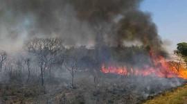 Tuhoisa tuli viime vuonna cerrado-savannialueella, joka on yksi Brasilian uhanalaisimmista elinympäristöistä. Kuva: José Cruz / ABr Wikimedia Commonsin kautta