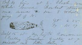 Entrata illustrata nel diario di bordo della nave baleniera del secolo 19th, Almira. Immagine: New Bedford Whaling Museum tramite Wikimedia Commons