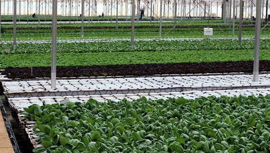 كيف دفع هذا برنامج بقالة المتجر المزارعين للذهاب الأخضر