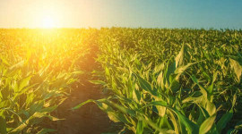 Stiger stigende kuldioxidniveauer virkelig plantevæksten?