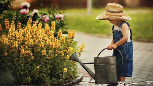 بهترین زمان برای پرورش گیاهان در طول موج حرارت