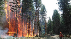 Future El Niño Events Could Spark An Even Higher Wildfire Risk