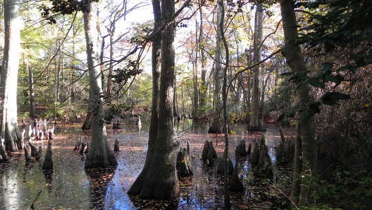 Why The World Needs More Swamps To Fight Climate Change