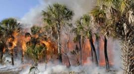 بڑھتی ہوئی فصلوں سے جنگلات کے قوانین بحال