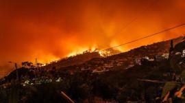 Le risque d'incendie de forêt peut être réduit grâce à l'agroforesterie