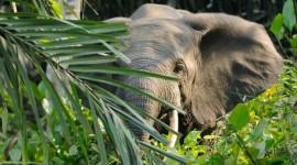 ゾウの食事は森林が繁栄するのを助ける