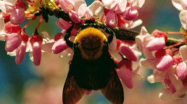 Crop diversity keeps bees buzzing happily