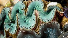 Los océanos ácidos pueden desencadenar la extinción masiva
