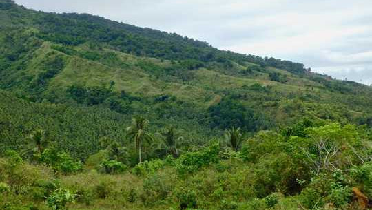 High-value Opportunities Exist To Restore Tropical Rainforests Around The World