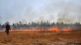 How Planned Burns Can Reduce Wildfire Risks