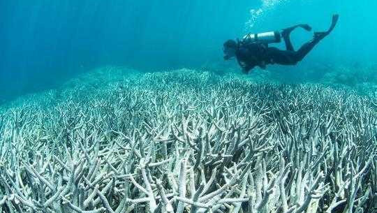 Bleaching Has Struck The Southernmost Coral Reef In The World