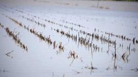 Klimaændringer påvirker Afgrødeudbytter og reducere globale fødevareforsyninger