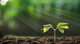 מגזים כמה ניתן לספוג CO₂ על ידי סיכוני נטיעת עצים המרתיעים את פעולת האקלים החשוב