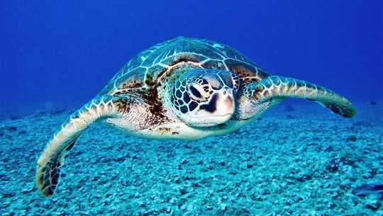 ما واقعاً در اقیانوس های جهان تعداد زیادی را انجام می دهیم