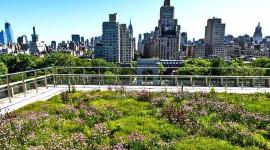 Suuret kaupungit muuttuvat vihreäksi taistelemaan ilmastonmuutosta vastaan