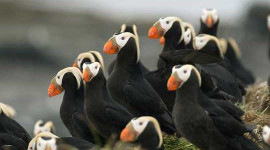 Our Climate Disruptions Are Causing Mass Die-offs In Seabirds
