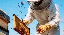 How Clean Is Your City? Just Ask The Bees