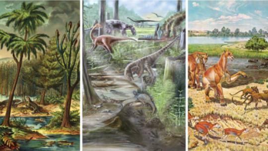 Djurdiversitet var stabilt i miljontals år innan människor kom med
