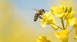 How Important Are Bees And What Would Happen If They Went Extinct?