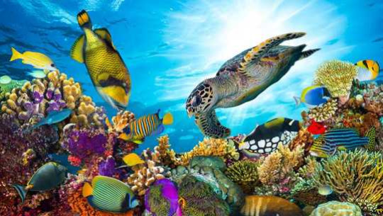 Where Is Ocean Biodiversity Most At Risk?