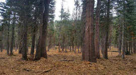 La restauration des forêts de Californie pour réduire les risques d'incendies de forêt prendra du temps, des milliards de dollars et un engagement important